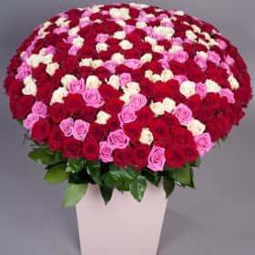 Композиция из 301 розы «Фейерверк счастья»