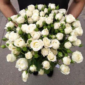 Роза кустовая Вивьен 70см