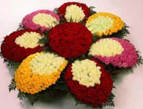 1001 роза Семицветик