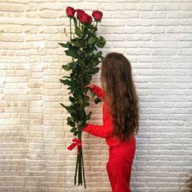 5 гигантских Красных роз 150 см