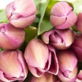 Тюльпан Розовый (от 21 шт.)