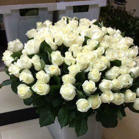 Роза кустовая Аваланж 60 см
