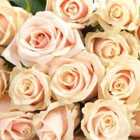 Роза кремовая (от 11 шт)