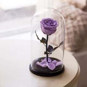 Сиреневая роза в колбе 30 см 2