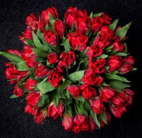 Тюльпаны красные 51 шт