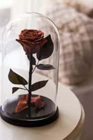 Роза шоколадного цвета в колбе 30 см