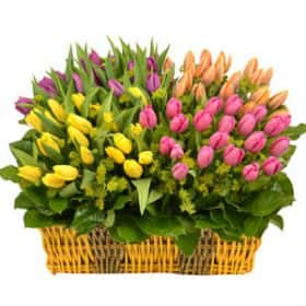 Корзина из 101 тюльпана (микс)