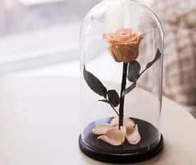 Кремовая роза в колбе 30 см