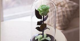 Салатовая роза в колбе 30 см