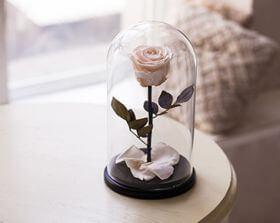 Белая роза в колбе 30 см